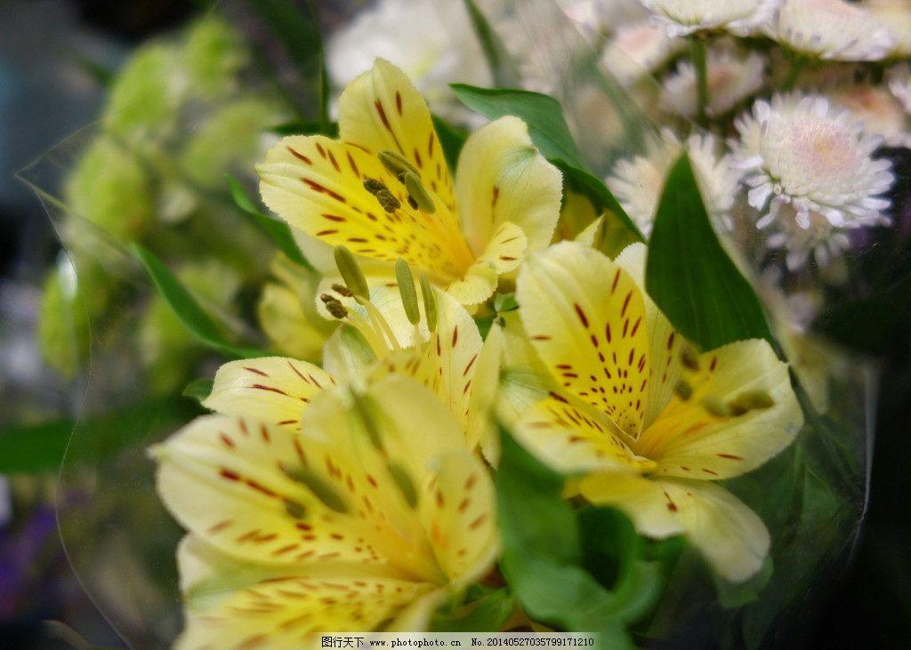 另一朵花 泰国 清迈 小清新 花束 旅行 美丽的花朵 花草 生物世界图片