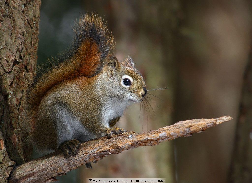 松鼠 摄影 生物 动物 树枝