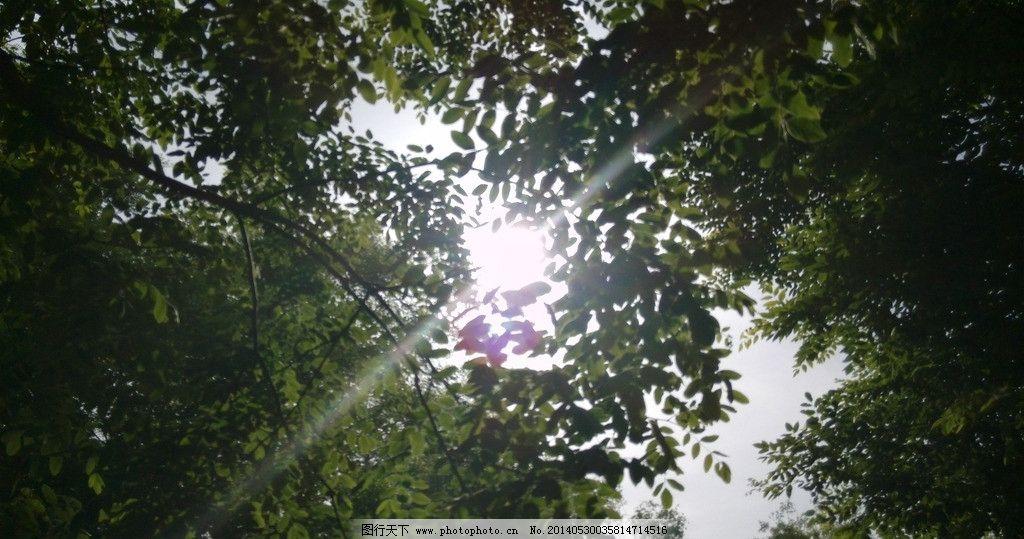 阳光 树木 照射 绿叶 摄影 校园 树木树叶 生物世界 72dpi jpg