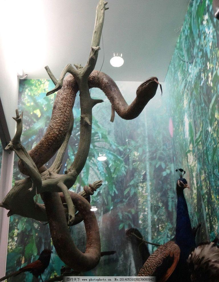 蟒蛇模型 蟒 蛇 孔雀 鸟 动物模型 动物标本 造景 橱窗 展览 展示