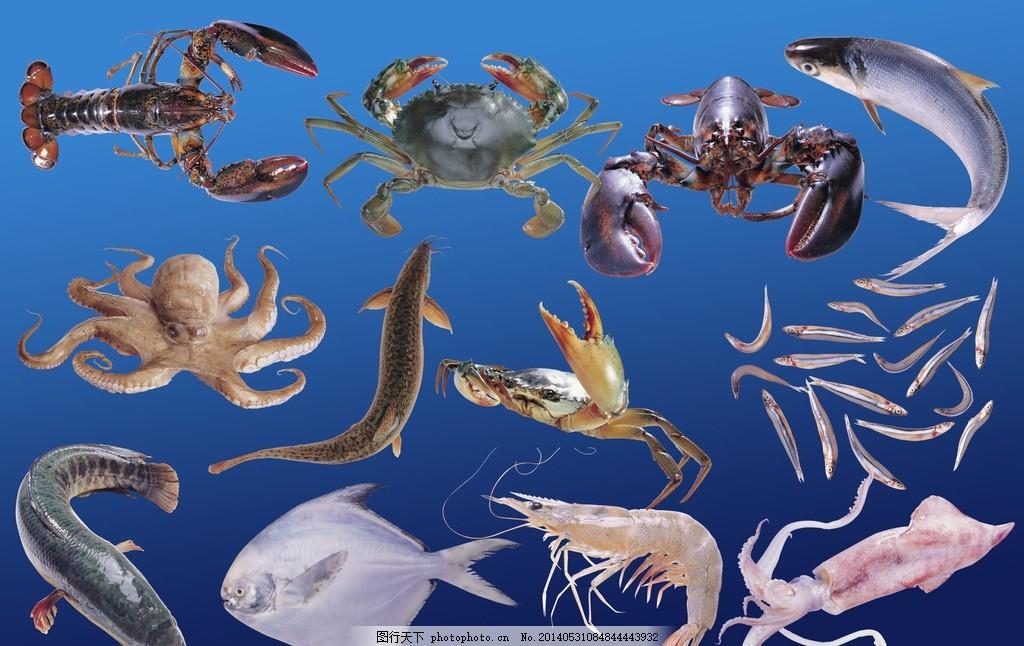 海洋动物 龙虾 螃蟹 章鱼 海鱼 水产品 海鲜 源文件