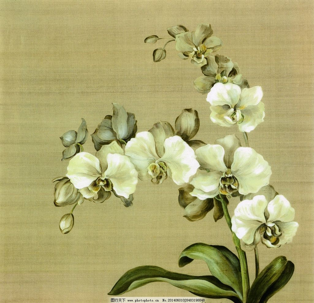 蝴蝶兰 兰花 白色蝴蝶兰 手绘植物 无框画 草本植物 装饰画 相框画 挂