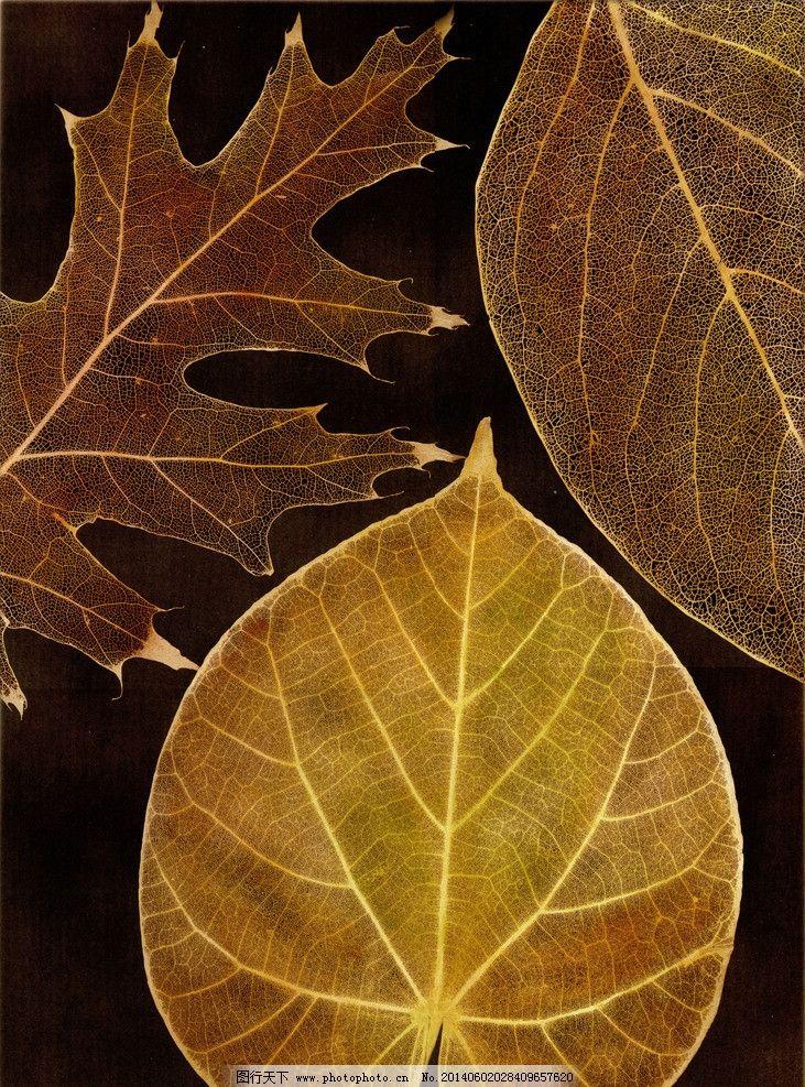 叶子 大自然 树叶 手绘植物 叶子纹理 装饰画 树叶标本 相框画