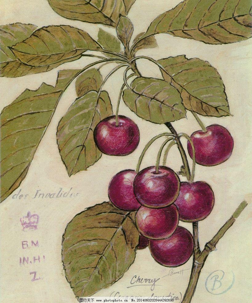 樱桃 红樱桃 车厘子 水果手绘 无框画 装饰画 挂画 酒店挂画 墙画