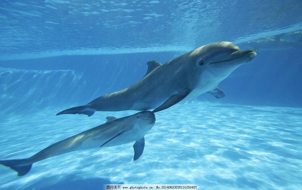 壁纸 动物 海洋动物 鲸鱼 桌面 1024_646