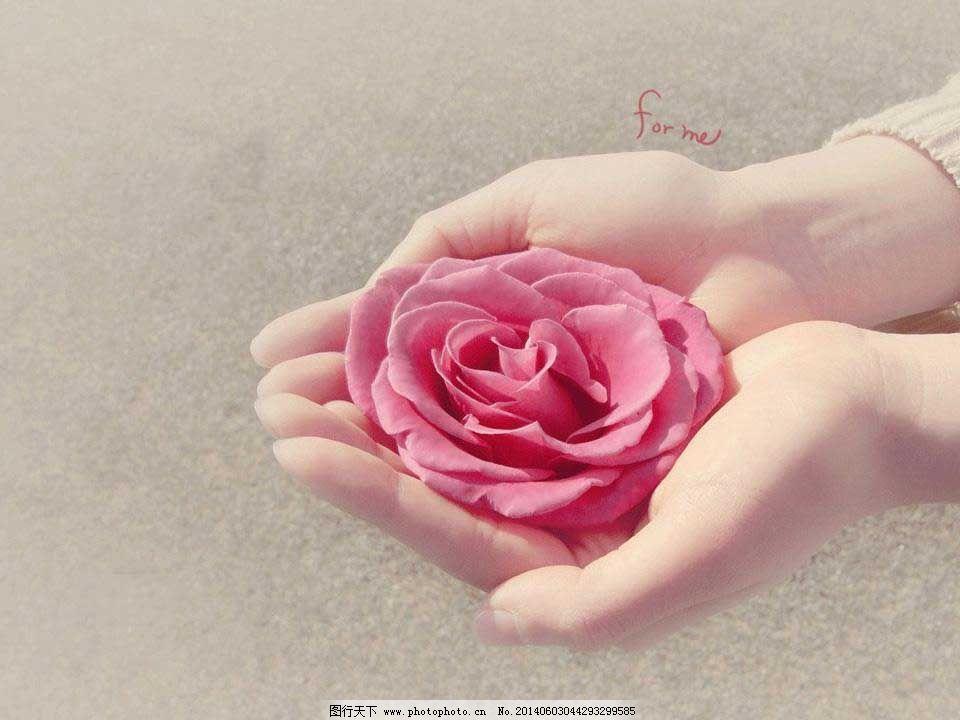 玫瑰物语ppt模板下载免费下载 爱情 玫瑰 唯美 温馨 玫瑰 爱情 温馨
