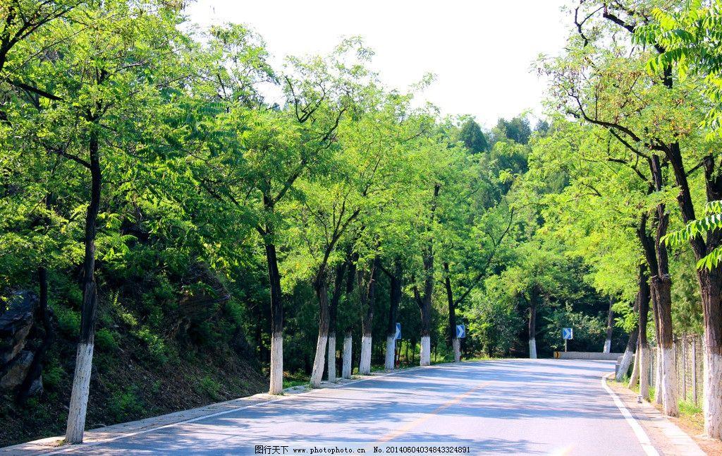 绿树 公路 绿色通道 路面 路旁 自然风景 自然景观 摄影 72dpi jpg