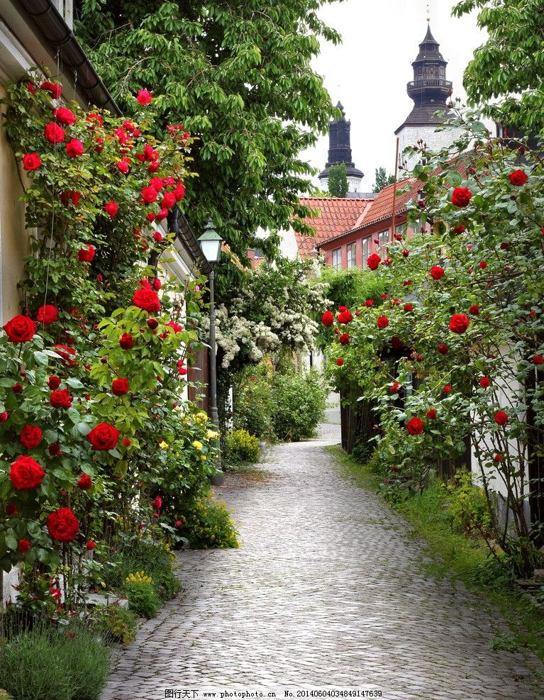 花园风景 花园 公园 鲜花 花朵 盛夏 夏天 自然风光 欧洲小镇 自然图片