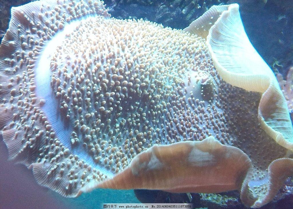 海洋生物 海洋 生物 灯光