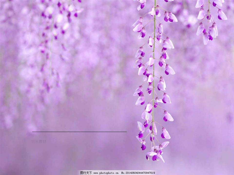 紫色花朵ppt模板