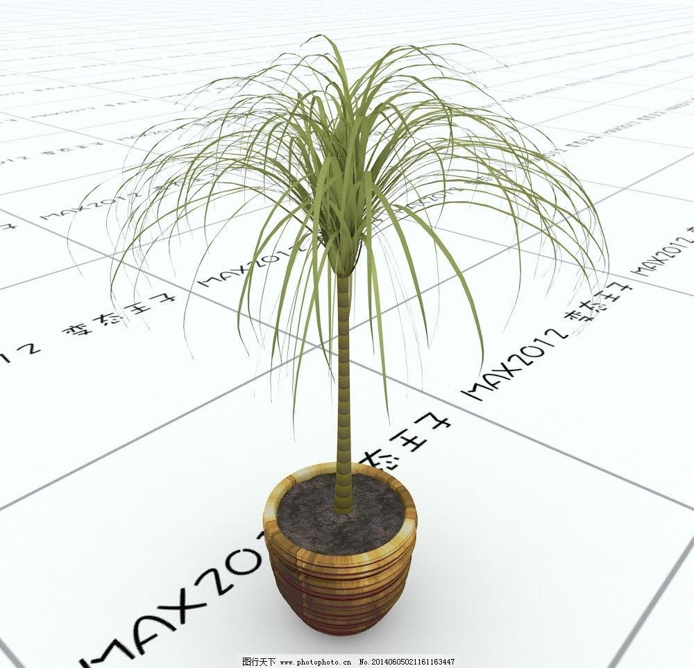 室内植物图片