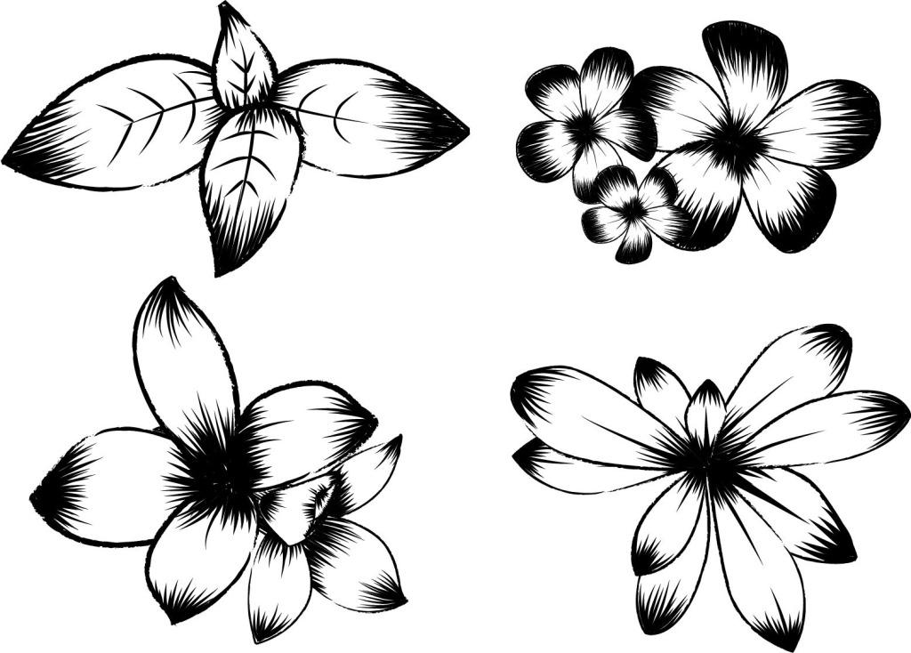 黑白花朵 黑白花朵免费下载 创意 手绘 矢量图 花纹花边