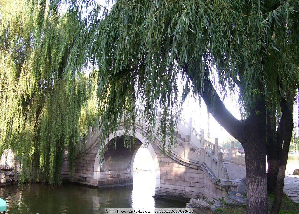 圆明园 圆明园图片素材下载 树木 柳树 睡莲 池塘 小桥 流水