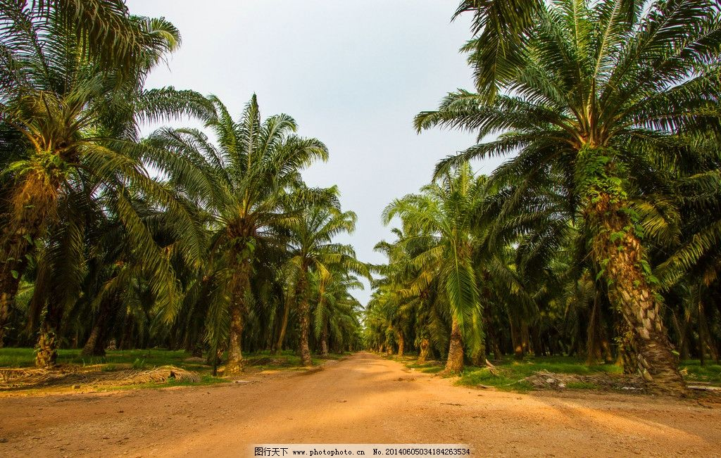 风景图片 树林/棕榈树种植园景观风光图片