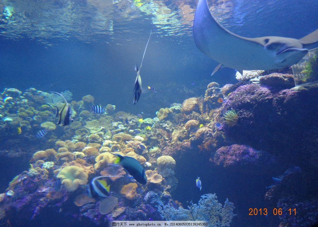 海低世界 海洋的一脚 青岛海底世界 珊瑚 珊瑚海 宿舍 海洋生物