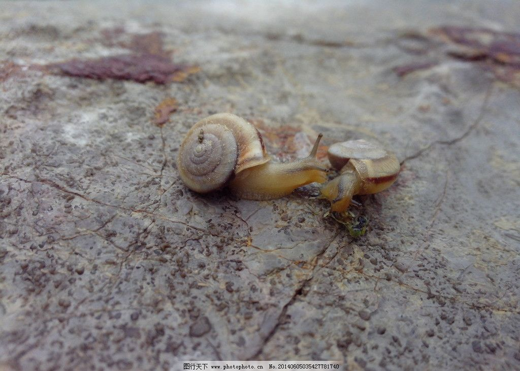 蜗牛 昆虫 露珠 植物 绿色 护眼 素材 生物世界 摄影 72dpi jpg