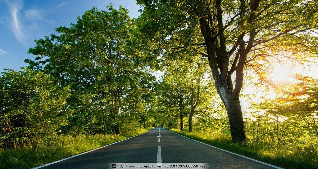 清晨道路 道路 二旁 蓝天 绿树 阳光 树木树叶 生物世界 摄影 240dpi
