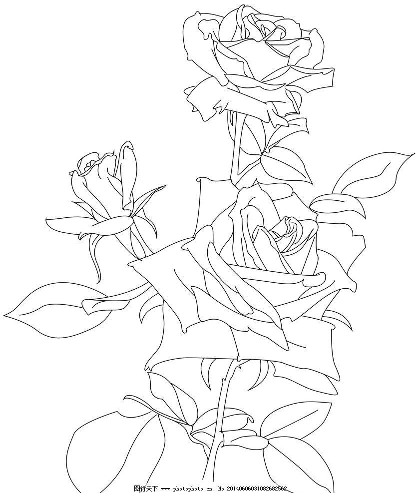 玫瑰花矢量线稿图片
