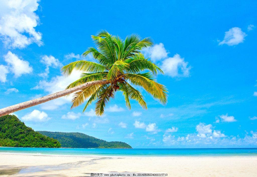 大海岛屿树的图片