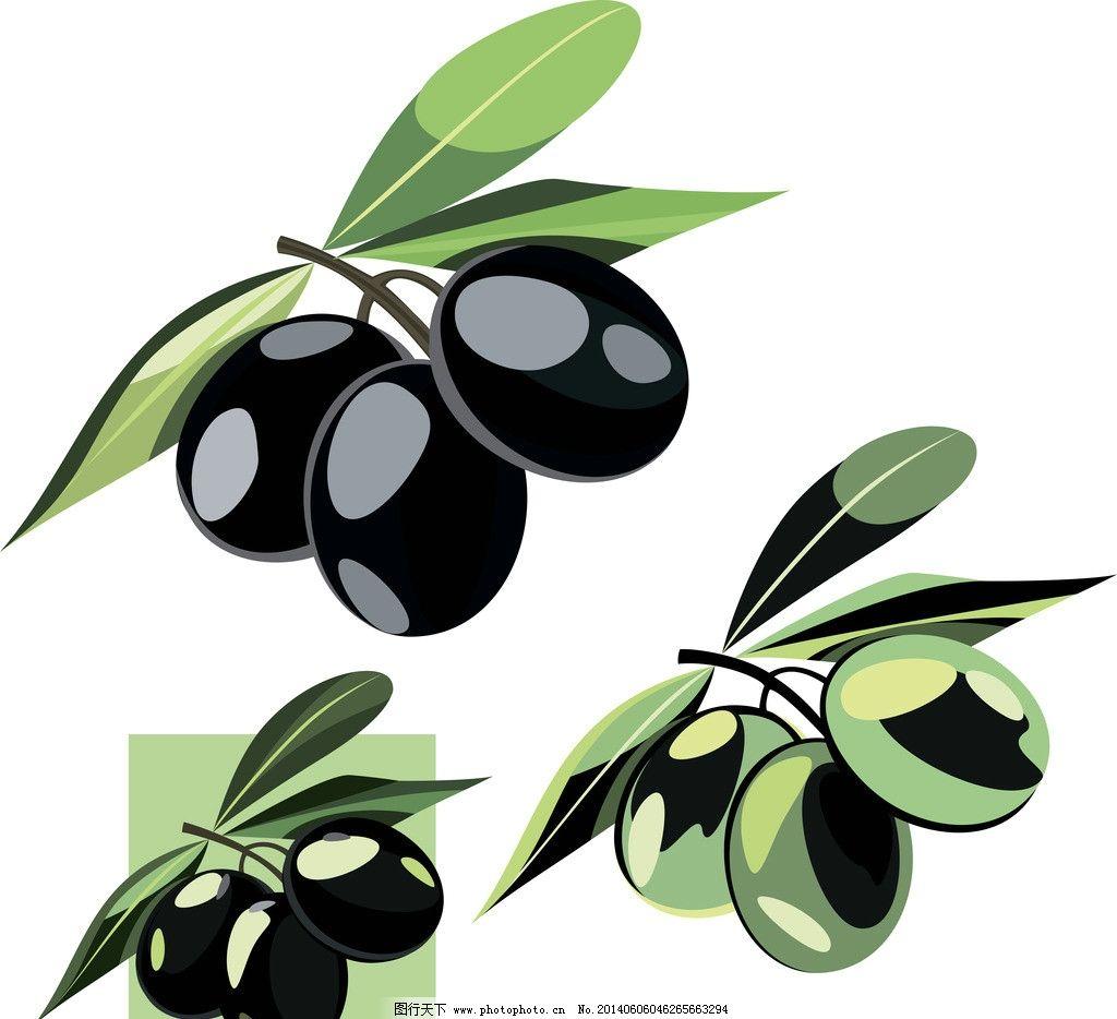 橄榄油 橄榄 营养 手绘 绿叶 矢量 餐饮美食 生活百科 eps 餐饮美食素