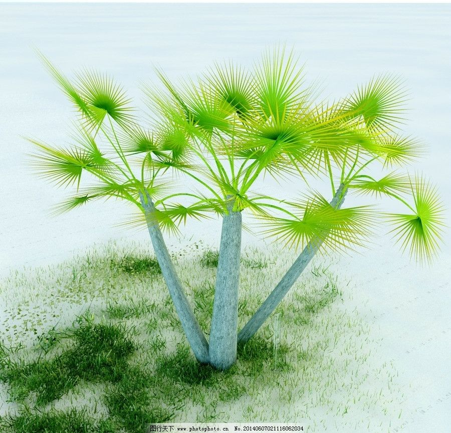 铁树 植物 景观植物 盆栽 vray模型 景观模型 园林植物 max模型 重制