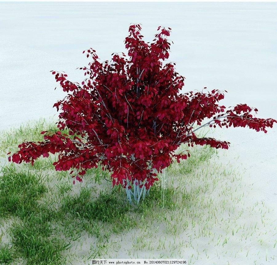 园林植物图片_3d作品设计_3d设计_图行天下图库