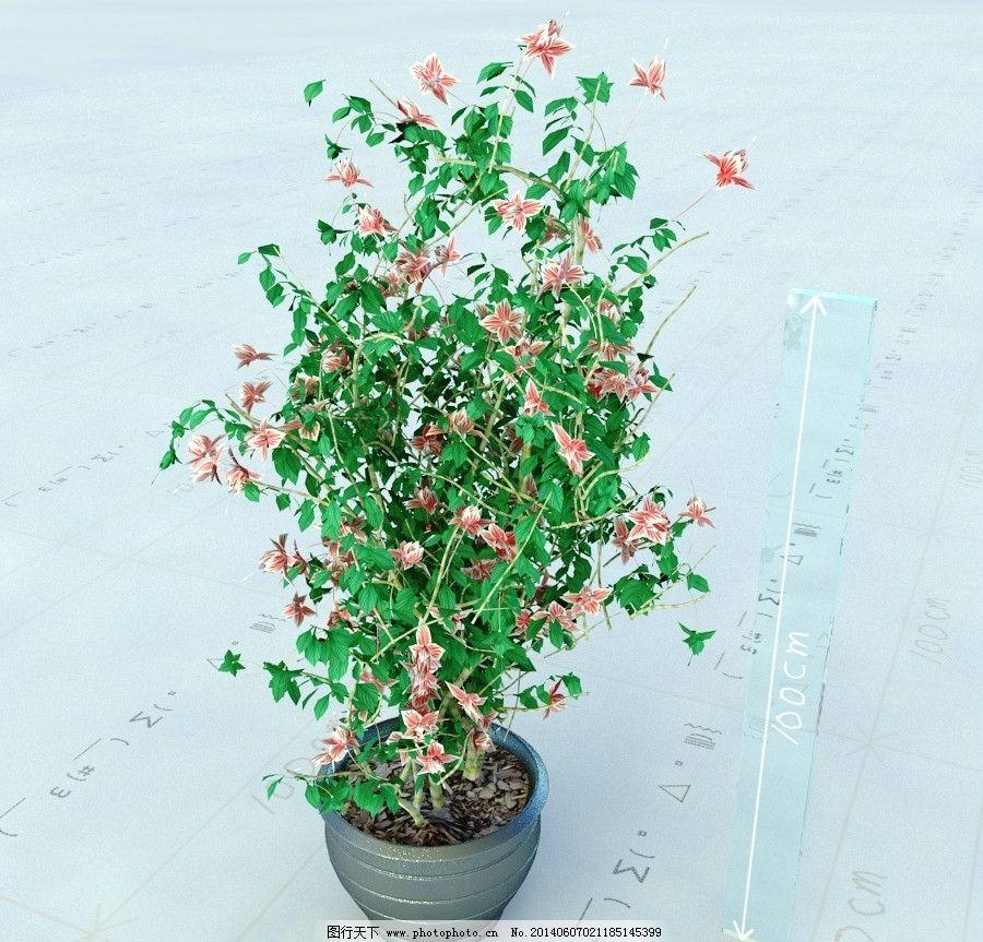 盆栽 植物 景观植物 vray模型 景观模型 max模型 重制版单体模型合辑