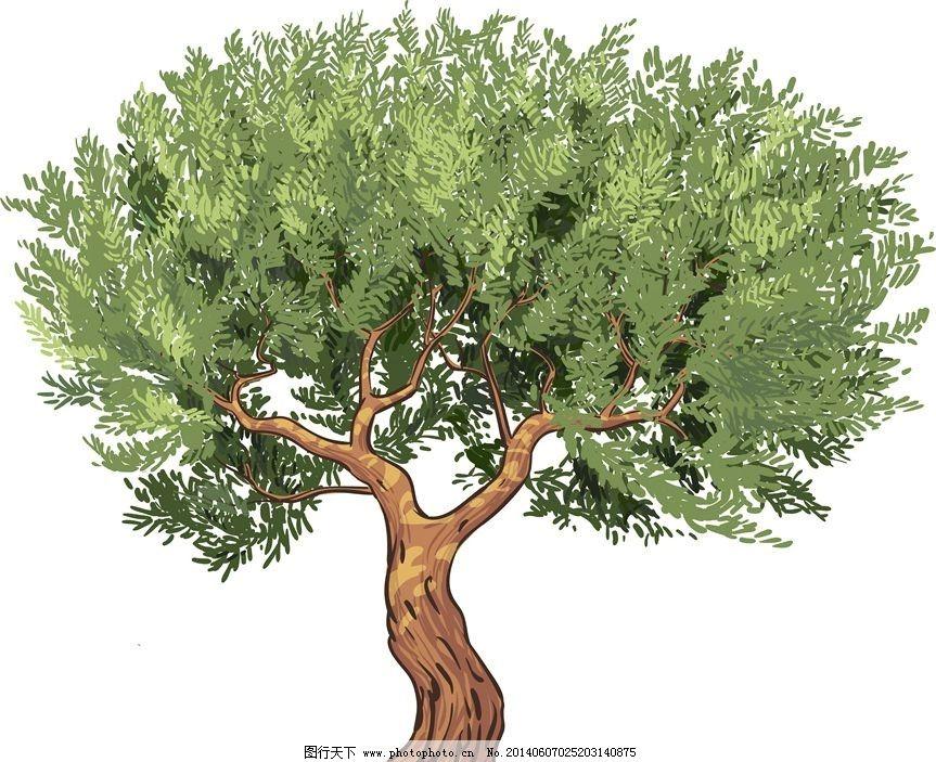 橄榄树图片_树木树叶_生物世界