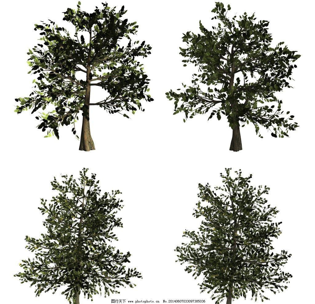 大树 松树 植物 绿色 树集合 单棵树 树素材 枯树 各种树 其他