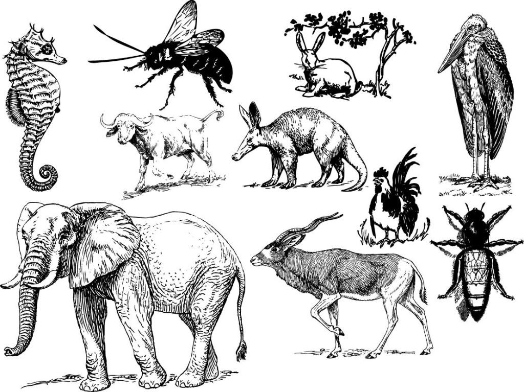 动物运木头看图写话