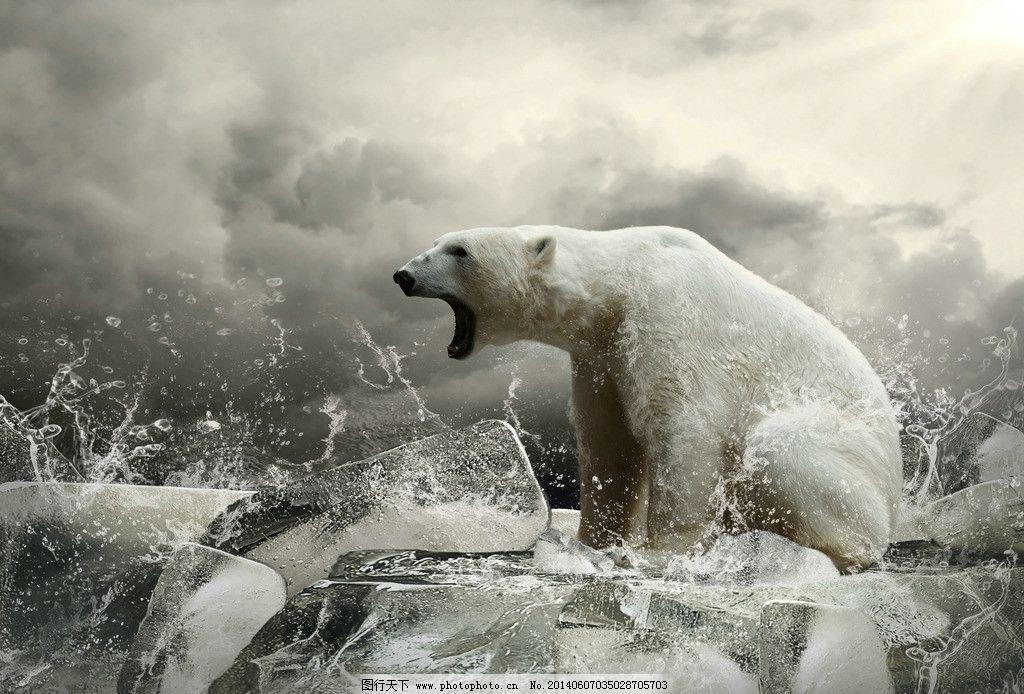 创意冰块上怒吼的北极 上怒吼的北极熊 高清图片 动物保护 环境保护