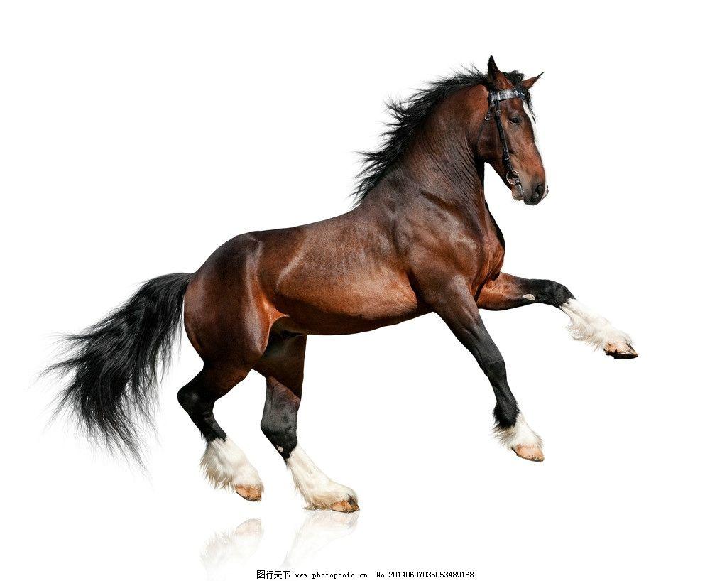 高清马摄影图片