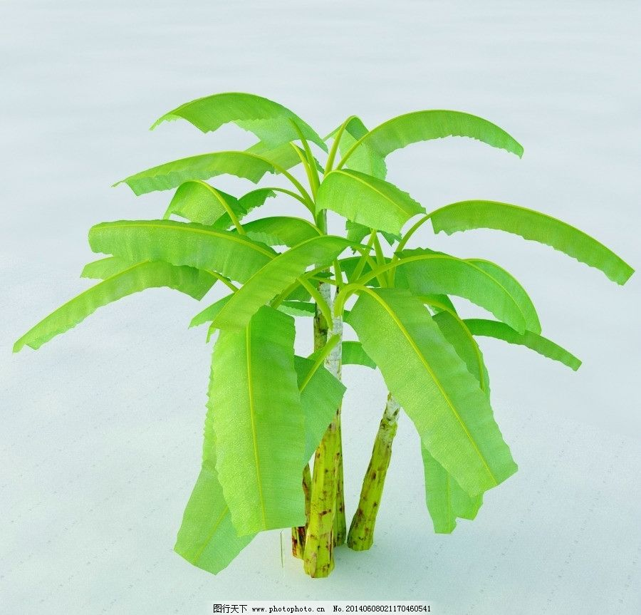 芭蕉树 香蕉树 植物 景观植物 园林植物 单体模型 vray模型 max模型