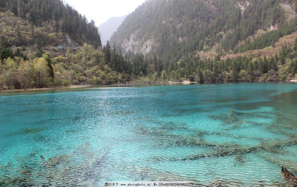 五花海 摄影 高清 四川 阿坝 九寨沟 风景名胜 自然风光 湖水 自然
