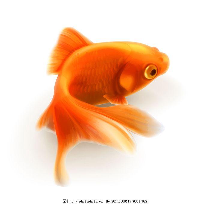 动物金鱼黑白图案设计