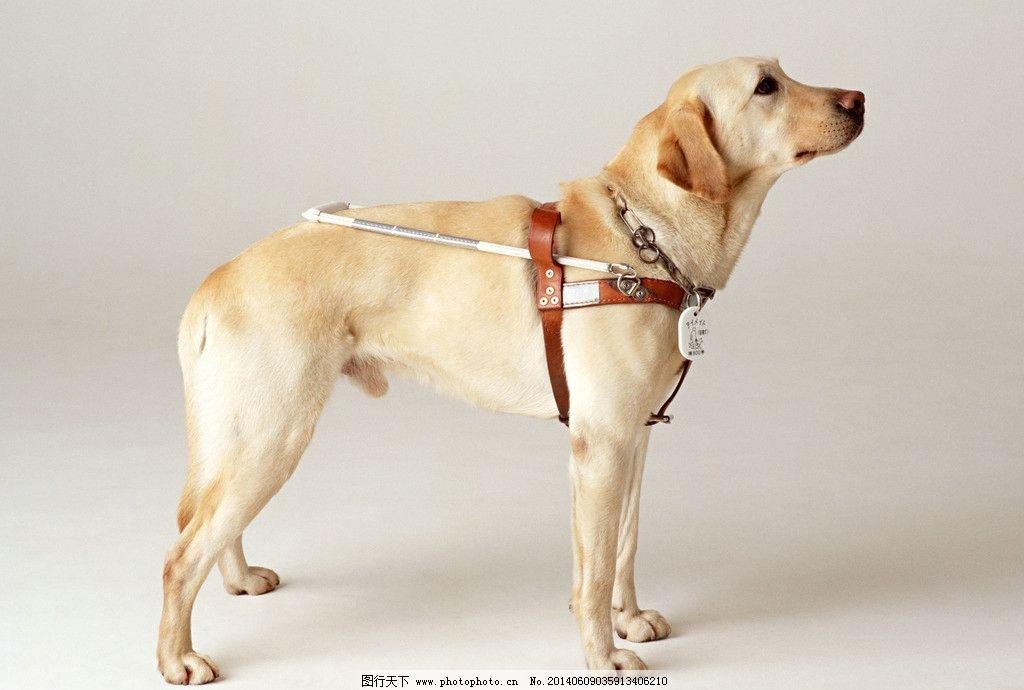 猎犬 狗 小狗 犬 家庭宠物 宠物 动物写真 动物 可爱动物 萌图 家禽