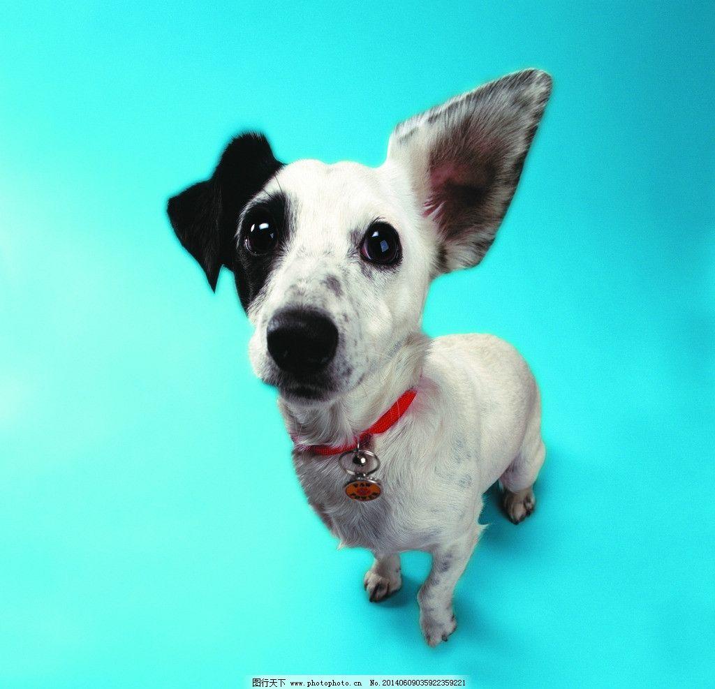 小狗 狗 犬 猫狗 家庭宠物 宠物 动物写真 动物 可爱动物 萌图 狗与