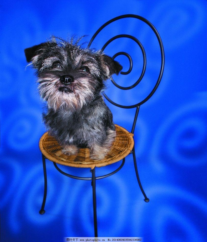 小狗 狗 犬 家庭宠物 宠物 动物写真 动物 可爱动物 萌图 家禽家畜
