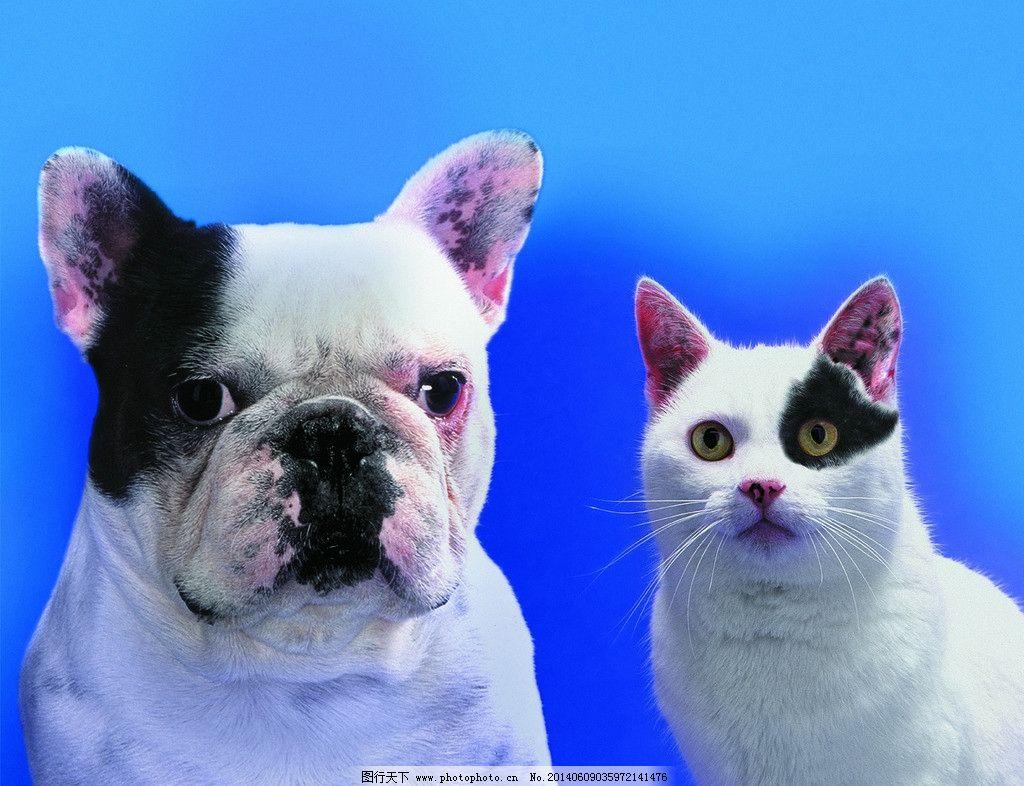 猫狗 狗 小狗 犬 小猫 猫 家庭宠物 宠物 动物写真 动物 可爱动物 萌