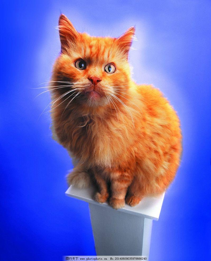 小猫 猫 猫狗 家庭宠物 宠物 动物写真 动物 可爱动物 萌图 家禽家畜