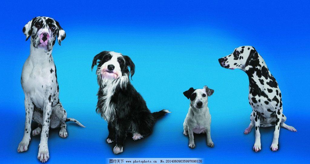 小狗 犬 猫狗 家庭宠物 动物写真 可爱动物 萌图 狗与主人 摄影
