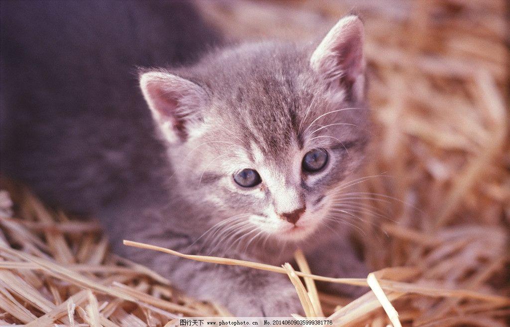 小猫 猫狗 家庭宠物 动物写真 可爱动物 萌图 摄影
