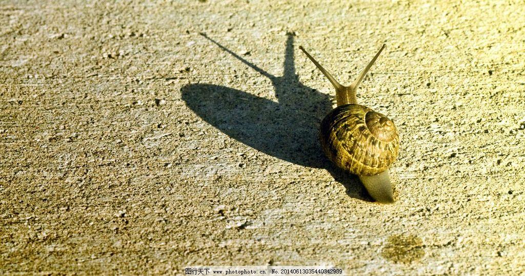 蜗牛 爬行 影子 软体 动物 生物 摄影