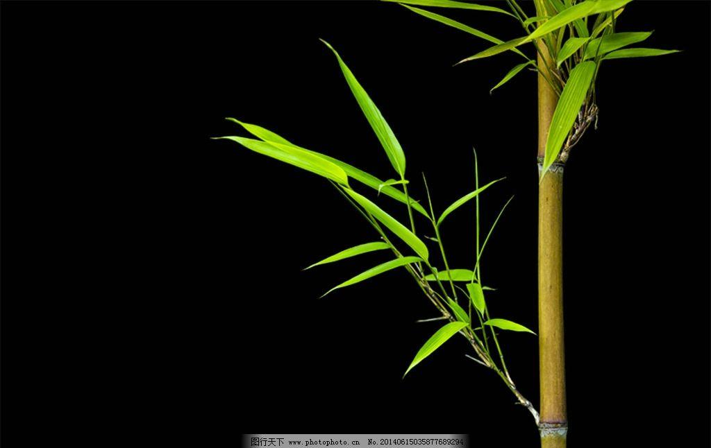 风景园林竹子手绘