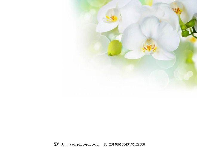 手绘鲜花ppt_背景底图_ppt_图行天下图库