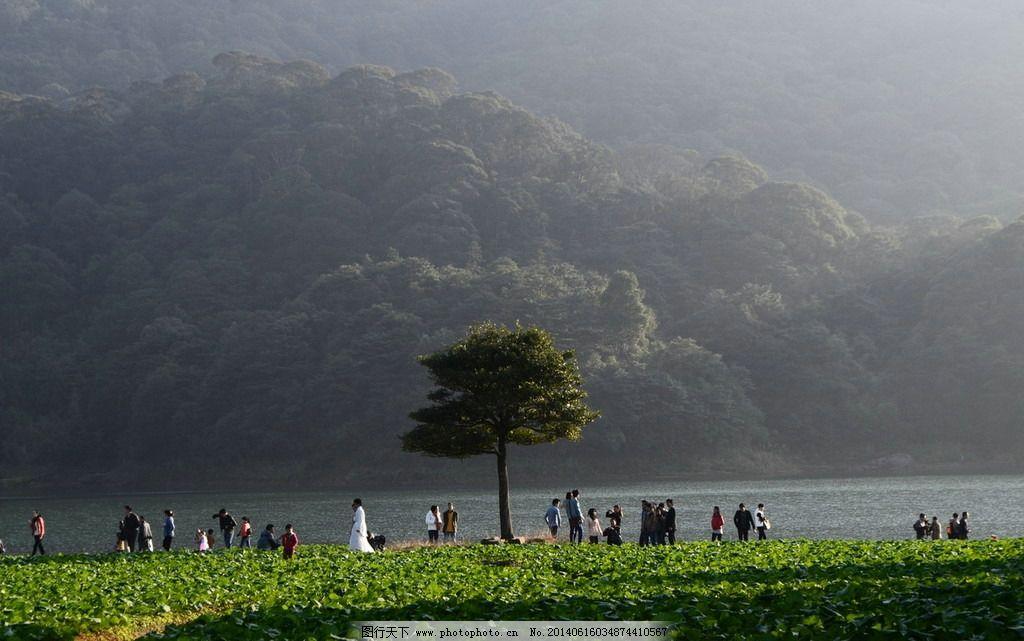 小树 河边的树 风景 树下的人群 摄影