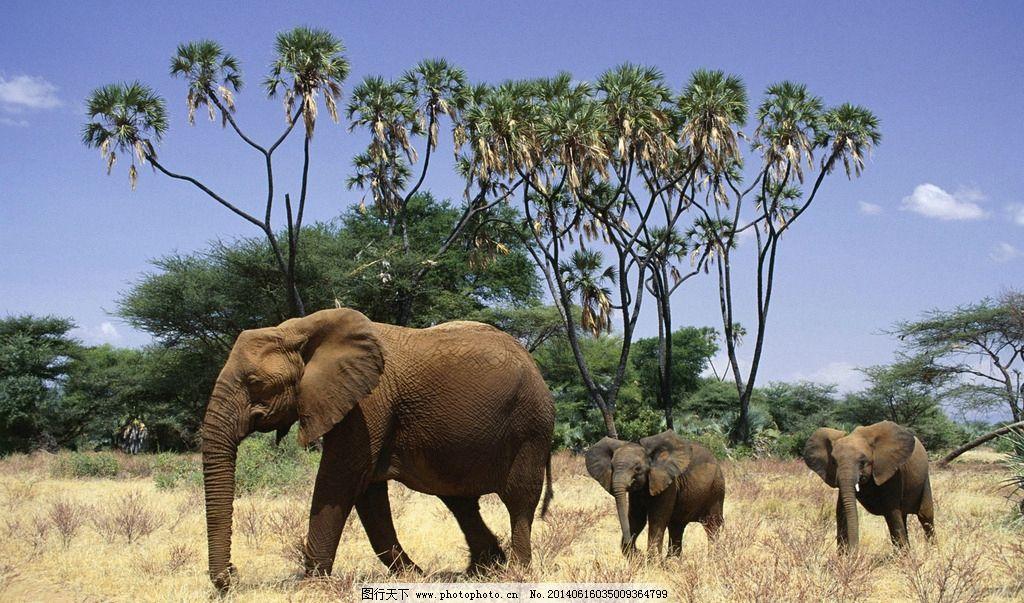 野生动物 非洲动物 塞伦盖地草原