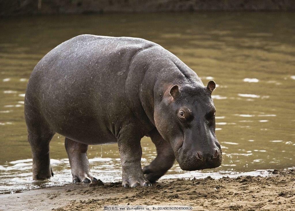 动物 野生动物 非洲动物