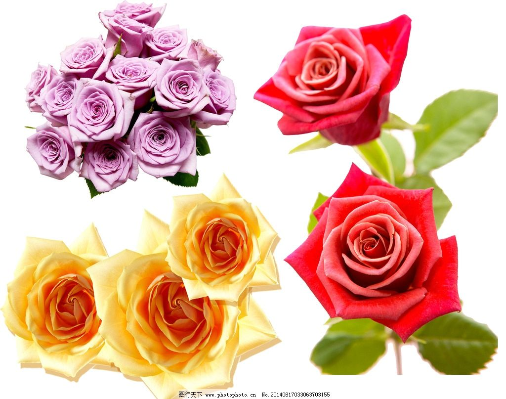 玫瑰 玫瑰素材 玫瑰合集 红玫瑰 黄玫瑰 平面素材 psd分层素材 设计 4