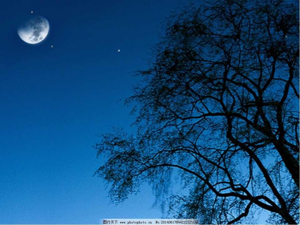 精美动态ppt模板免费下载 大树 动态 精美 树影 夜晚 月光 月亮 精美